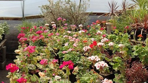 """OSU Extension Offers  """"What About Winter?"""" Horticulture Workshop"""